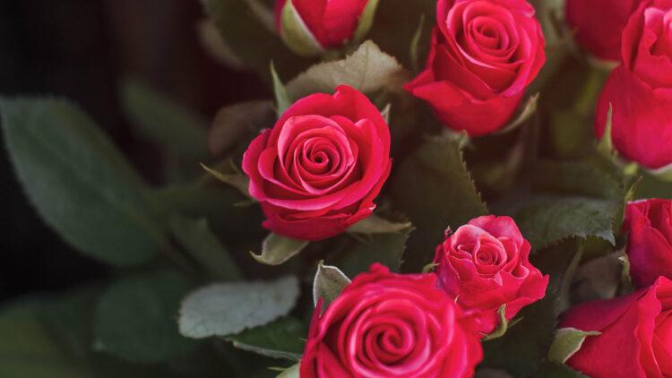 Cvetni aranžmani za sahrane